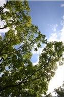 Baum & Wolken