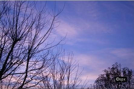 Baeume_Wolken_002 (spx)