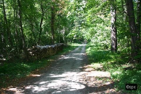 Waldweg 004 (spx)