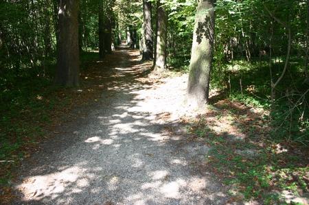Wald 005 (spx)