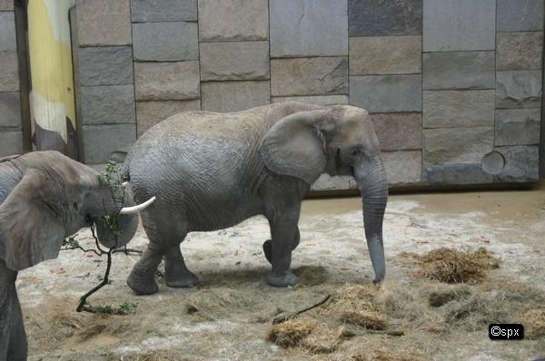 i6478-schoenbrunn-elefanten