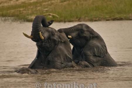 Elefant-2-2