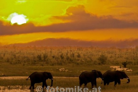 Elefant-4