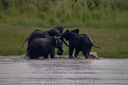 Elefant-5-2