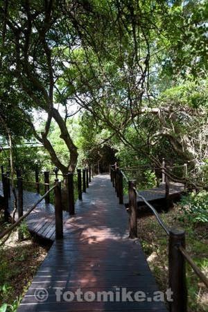 Makakatana Bay Lodge-3